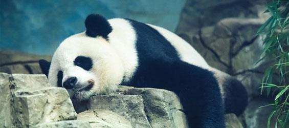 Panda Integrated Google Algorithm SEO